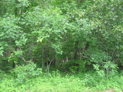 Fairfield Glade Residential Lots & Land For Sale: 132 Ivy Brook Lane