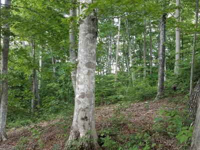 Residential Lots & Land For Sale: 2410? Locust Grove Rd