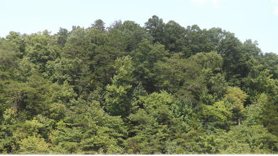 Residential Lots & Land For Sale: Panther Creek