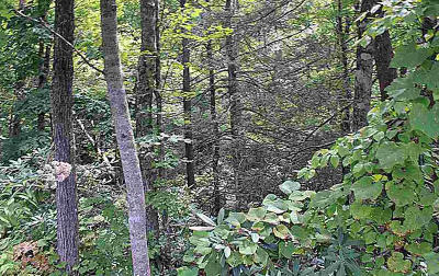 Gatlinburg Residential Lots & Land For Sale: Lot 5 Old Cartertown Road