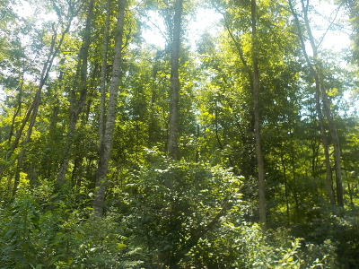 Bean Station Residential Lots & Land For Sale: 0000 Miller Hollow Road