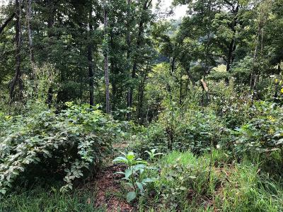 Lafollette Residential Lots & Land For Sale: Lot 67 Waterfront Tr