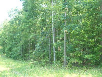 Cumberalnd Cove, Cumberland Cove, Cumberland Cove ., Cumberland Cove, A Vast Wooded Subdivision On The Plateau Between Cookeville And, Cumberland Cove Iv, Cumberland Cove Unit, Cumberland Cove Unit 2, Cumberland Cove Unit Lii Residential Lots & Land For Sale: Indian Park Rd