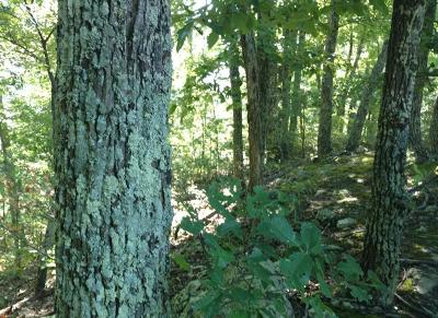Sevier County Residential Lots & Land For Sale: Lot 34 Black Oak Drive