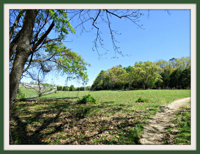 White Pine Residential Lots & Land For Sale: Tract 2 Parsonage Rd
