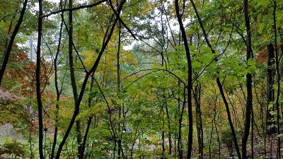 Mooresburg Residential Lots & Land For Sale: Fire Tower Rd