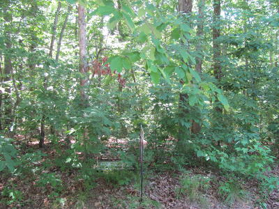 Fairfield Glade Residential Lots & Land For Sale: 230 Snead Drive