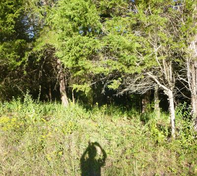 Residential Lots & Land For Sale: 106 Inola Place