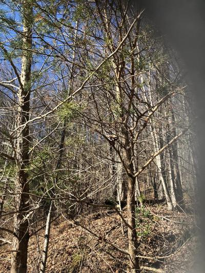 Claiborne County Residential Lots & Land For Sale: 234 Elizabeth Russell Rd