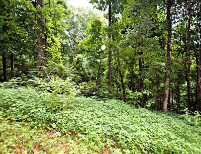 Gatlinburg Residential Lots & Land For Sale: Lot 10 N Baden Drive
