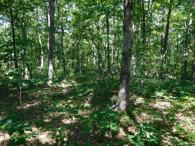 Residential Lots & Land For Sale: East Cove Road #4