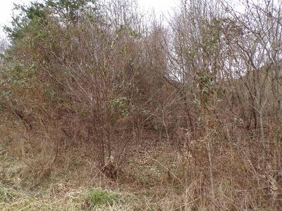 Harrogate Residential Lots & Land For Sale: 141 Falcon Crest Drive