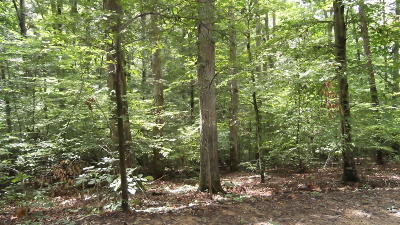 White Pine Residential Lots & Land For Sale: Cove Lane