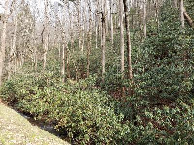 Gatlinburg Residential Lots & Land For Sale: Lot 17 Butler Branch Rd