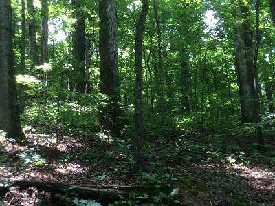 Caryville Residential Lots & Land For Sale: Garden Lane Lot # 9