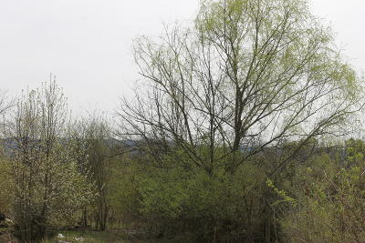 Maryville Residential Lots & Land For Sale: Lot #11 Spurgeon Lane