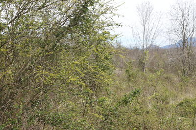 Maryville Residential Lots & Land For Sale: Lot #12 Spurgeons Lane