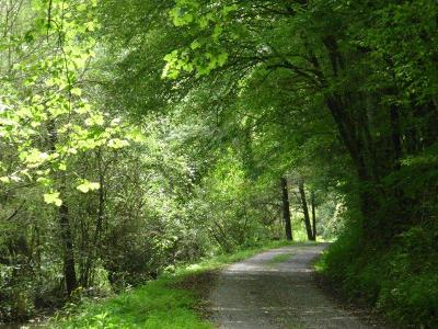 Residential Lots & Land For Sale: 150 Burchfield Cemetery Rd