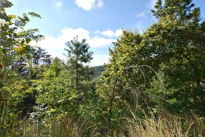 Sevier County Residential Lots & Land For Sale: 2084 Bluff Mountain Rd