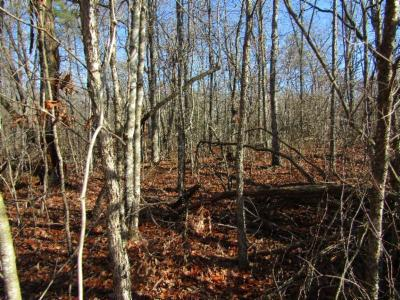 Cumberalnd Cove, Cumberland Cove, Cumberland Cove ., Cumberland Cove, A Vast Wooded Subdivision On The Plateau Between Cookeville And, Cumberland Cove Iv, Cumberland Cove Unit, Cumberland Cove Unit 2, Cumberland Cove Unit Lii Residential Lots & Land For Sale: Lot 19 Laurel Loop