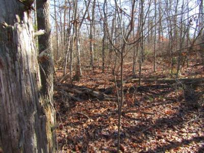 Cumberalnd Cove, Cumberland Cove, Cumberland Cove ., Cumberland Cove, A Vast Wooded Subdivision On The Plateau Between Cookeville And, Cumberland Cove Iv, Cumberland Cove Unit, Cumberland Cove Unit 2, Cumberland Cove Unit Lii Residential Lots & Land For Sale: Lot 20 Laurel Loop