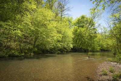 Loudon County, Monroe County Residential Lots & Land For Sale: Shoal Creek Rd