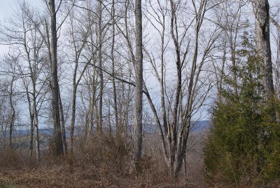 Speedwell Residential Lots & Land For Sale: Horseshoe Bend