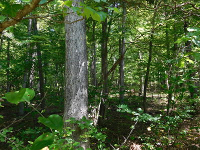 Cumberalnd Cove, Cumberland Cove, Cumberland Cove ., Cumberland Cove, A Vast Wooded Subdivision On The Plateau Between Cookeville And, Cumberland Cove Iv, Cumberland Cove Unit, Cumberland Cove Unit 2, Cumberland Cove Unit Lii Residential Lots & Land For Sale: Center Place Place #8