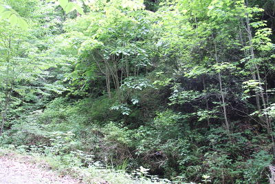 Sevier County Residential Lots & Land For Sale: Youngblood Way