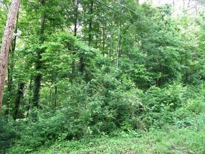 Knoxville Residential Lots & Land For Sale: Reddege Rd