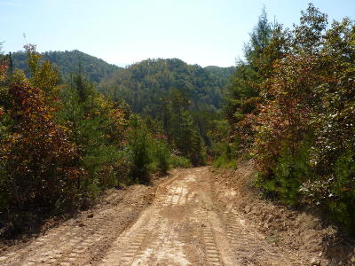 Sevier County Residential Lots & Land For Sale: 1002 Elvin Branch Rd
