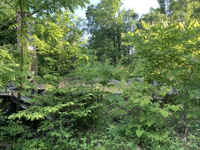 Seymour Residential Lots & Land For Sale: 740 Richards Lane