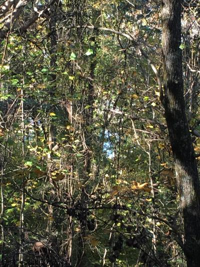 Hickory Star Residential Lots & Land For Sale: Lot 61 Overlook Tr