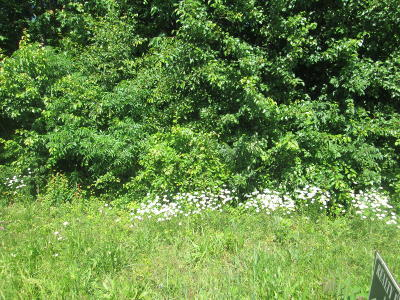 Knox County Residential Lots & Land For Sale: Lovell Rd