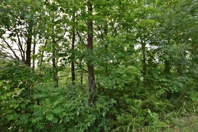 Sevierville Residential Lots & Land For Sale: Lot 20 Wedge Tailed Lane