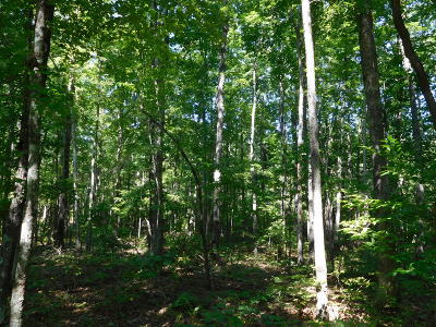 Cumberalnd Cove, Cumberland Cove, Cumberland Cove ., Cumberland Cove, A Vast Wooded Subdivision On The Plateau Between Cookeville And, Cumberland Cove Iv, Cumberland Cove Unit, Cumberland Cove Unit 2, Cumberland Cove Unit Lii Residential Lots & Land For Sale: Oesterman Drive #8