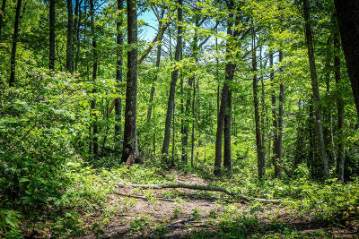Cumberalnd Cove, Cumberland Cove, Cumberland Cove ., Cumberland Cove, A Vast Wooded Subdivision On The Plateau Between Cookeville And, Cumberland Cove Iv, Cumberland Cove Unit, Cumberland Cove Unit 2, Cumberland Cove Unit Lii Residential Lots & Land For Sale: Cliff Park Road #8