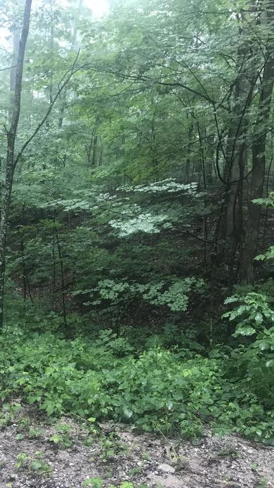Anderson County, Campbell County, Claiborne County, Grainger County, Union County Residential Lots & Land For Sale: Scenic Point Drive