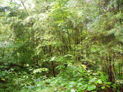 Sevier County Residential Lots & Land For Sale: Lot# 36 Red Cedar Lane