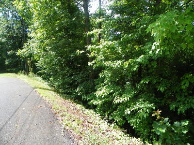 Sevier County Residential Lots & Land For Sale: Lot# 50 Red Cedar Lane