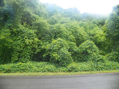Sevier County Residential Lots & Land For Sale: Lot# 29 Old Mountain Road