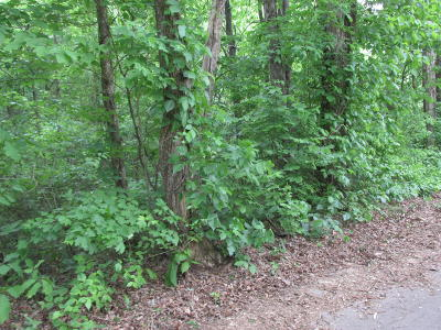 Blount County Residential Lots & Land For Sale: Fork Rd