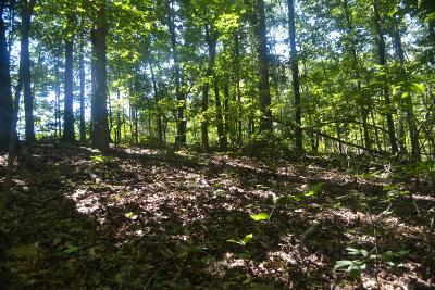 Loudon County Residential Lots & Land For Sale: Lawhon Farm Rd.