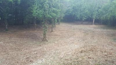 Knoxville Residential Lots & Land For Sale: E Raccoon Valley Drive