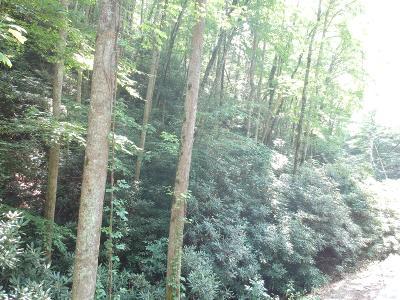 Gatlinburg Residential Lots & Land For Sale: Butler Branch Rd