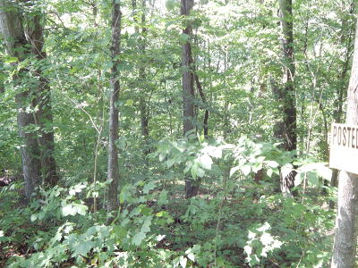 Rock Harbor, Rock Harbor Ii Sect I, Rock Harbor Ii Sect Iii A, Rock Harbor Ii Sect Iii B, Rock Harbor, Norris Lake, Rock Harbor Ii Section 1, Rock Harbor Phase 1 Residential Lots & Land For Sale: Marble Point Way Lot 254