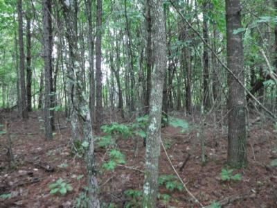 Residential Lots & Land For Sale: 625 Bill Roberts Rd