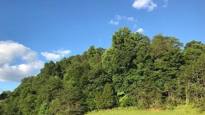 Knoxville Residential Lots & Land For Sale: 12 Ac Pickens Gap Rd