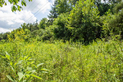 Anderson County, Campbell County, Claiborne County, Grainger County, Union County Residential Lots & Land For Sale: Murphy Mill Rd