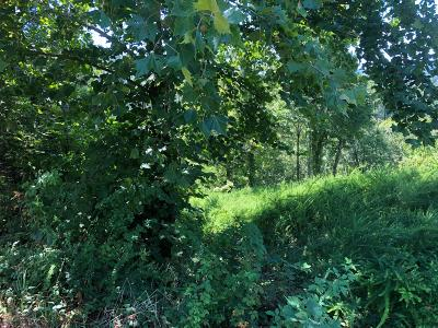 Anderson County, Campbell County, Claiborne County, Grainger County, Union County Residential Lots & Land For Sale: 138 Cove Court